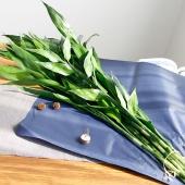 绿植盆栽植物 富贵竹  水培富贵竹 观音竹 转运竹